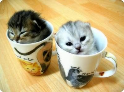 かわいい子猫画像358