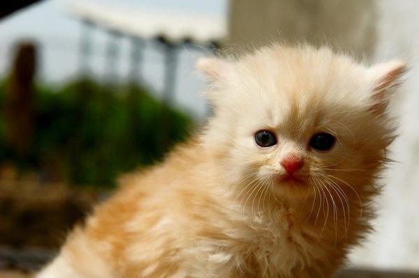 可愛い子猫画像33