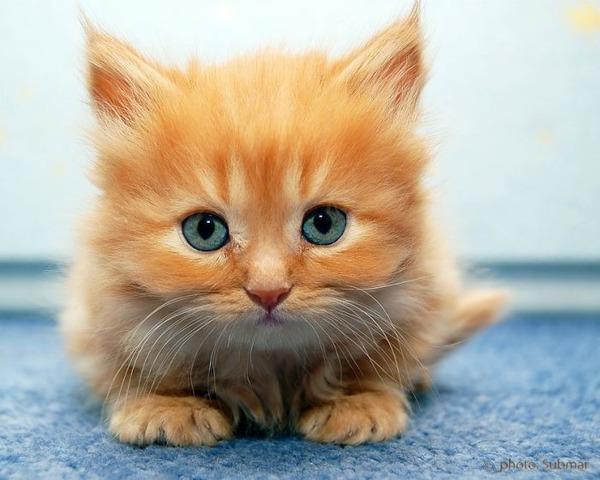 かわいい子猫画像352