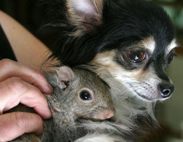 動物仲良し可愛い画像24