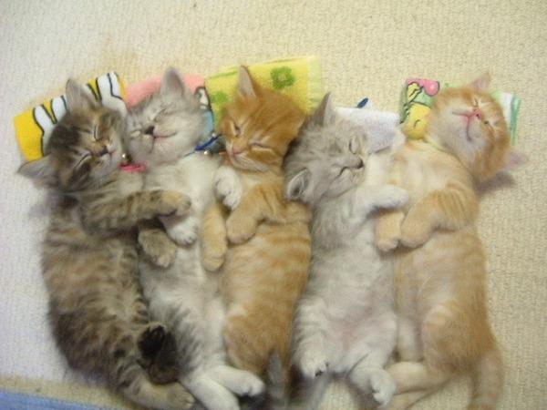 かわいい子猫画像359