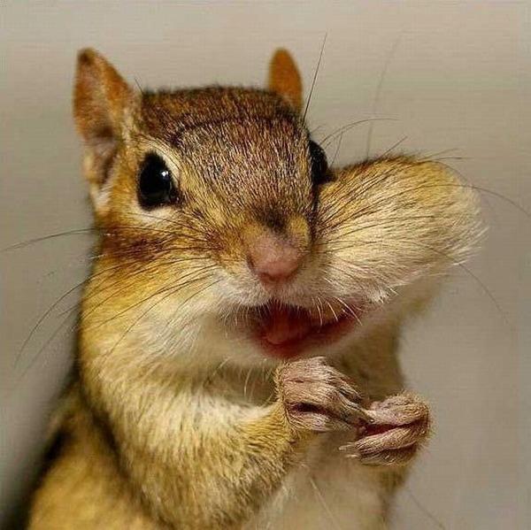 귀여운 다람쥐 59