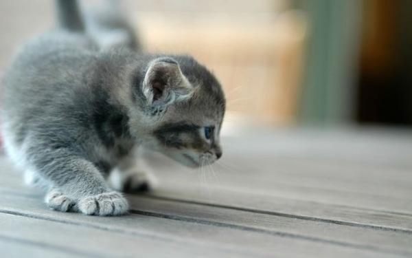 可愛い子猫画像32