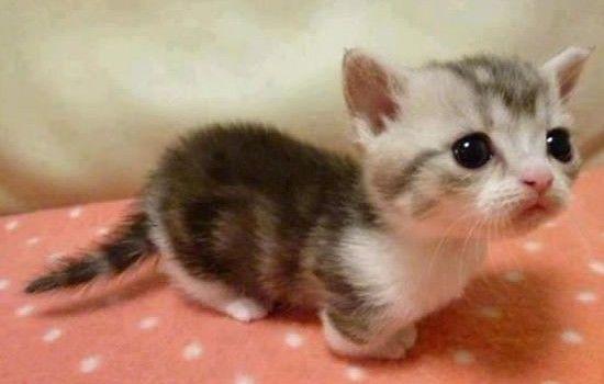 かわいい子猫画像333
