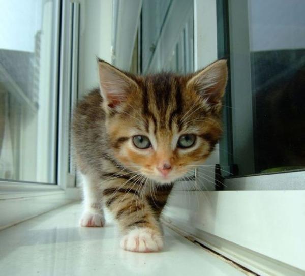 可愛い子猫画像24