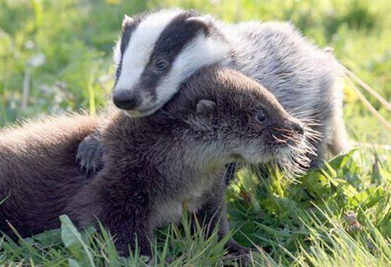動物仲良し可愛い画像31