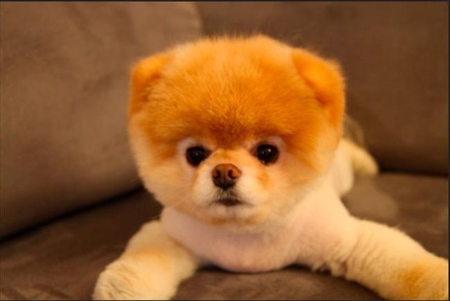 かわいい子犬画像28