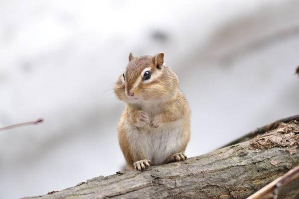 귀여운 다람쥐 4