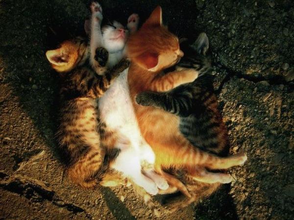 可愛い子猫画像35