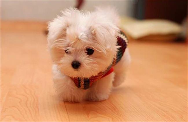 かわいい子犬画像102