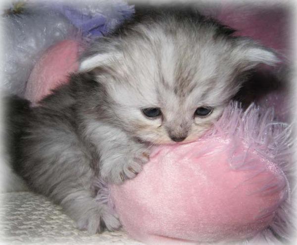 かわいい子猫画像312