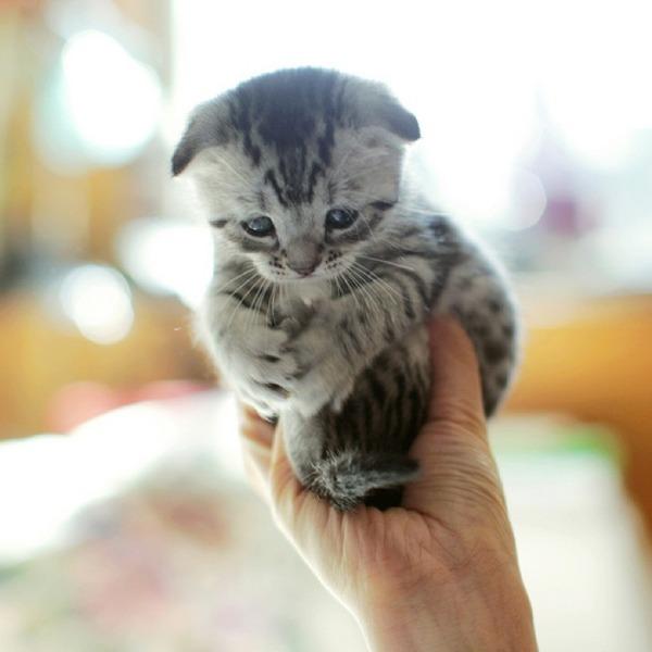 かわいい子猫画像36