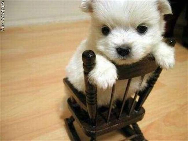かわいい子犬画像70