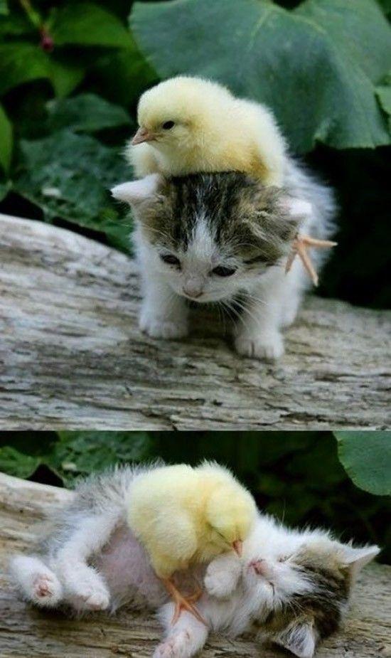 動物仲良し可愛い画像11