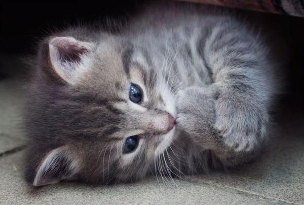 かわいい子猫画像339