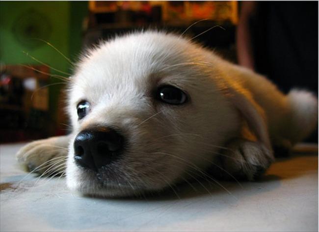 かわいい子犬画像121
