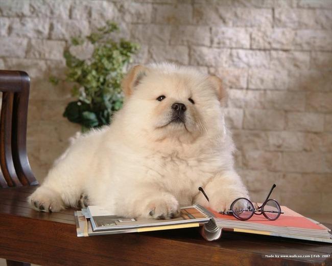 かわいい子犬画像33
