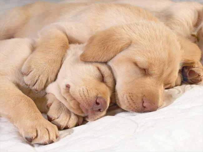 かわいい子犬画像60