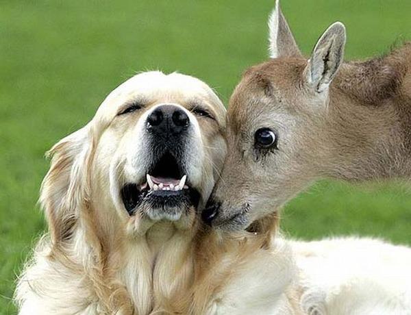 動物仲良し可愛い画像28