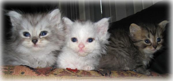 かわいい子猫画像315
