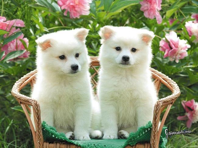 かわいい子犬画像21