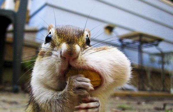 귀여운 다람쥐 3