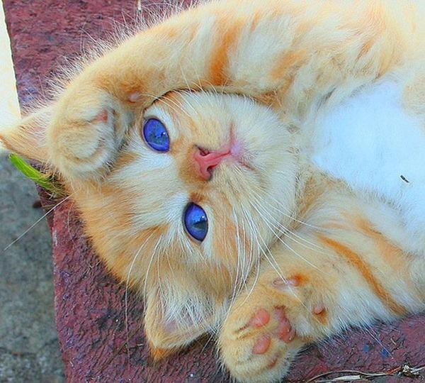 かわいい子猫画像346