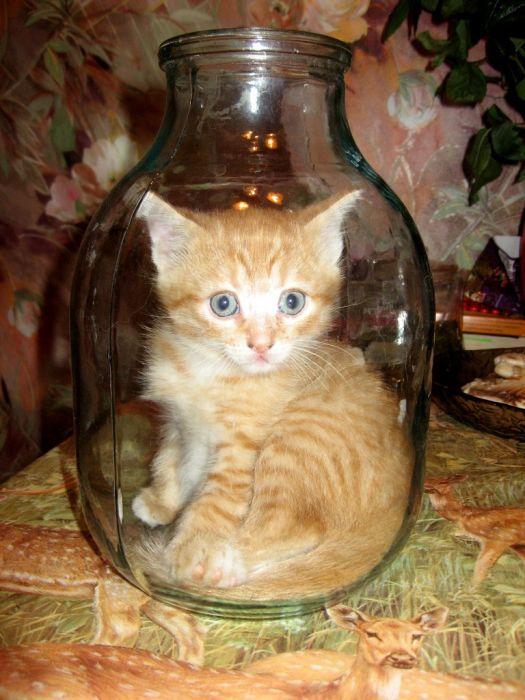 可愛い子猫画像10