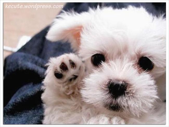 かわいい子犬画像48