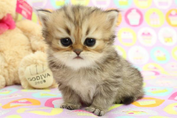 かわいい子猫画像360