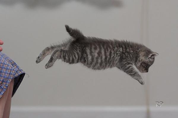 かわいい子猫画像24