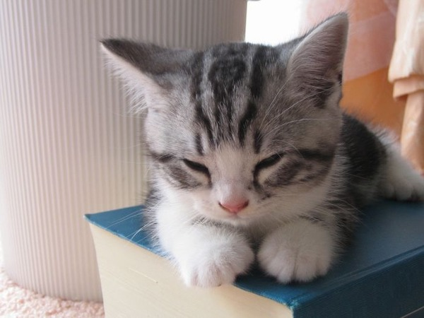 可愛い子猫画像31