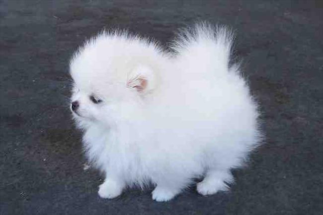 かわいい子犬画像20
