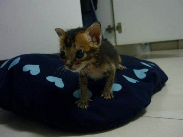 子猫 保護9
