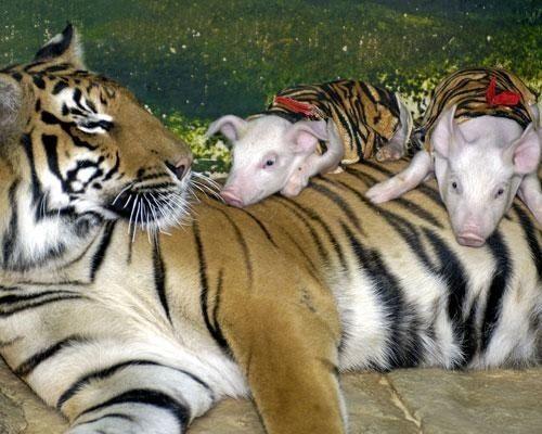 動物 仲良し 画像3