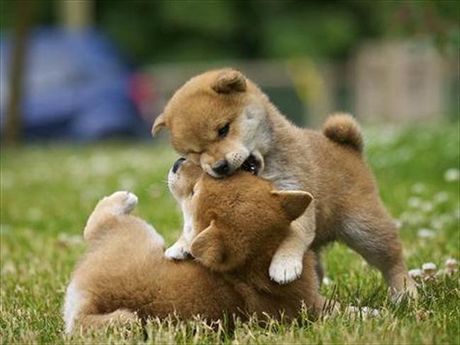 かわいい子犬画像127
