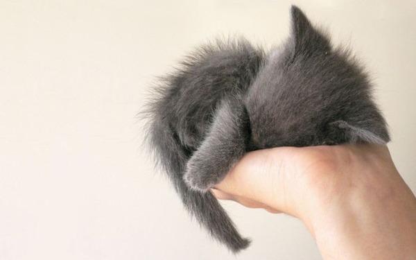 可愛い子猫画像14