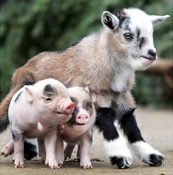 動物仲良し可愛い画像9
