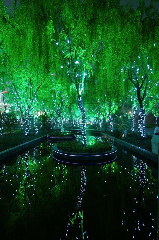 Magic-Forest-in-Shanghai