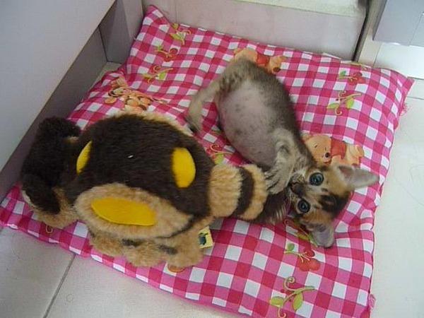 子猫 保護12