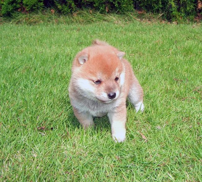 かわいい子犬画像14