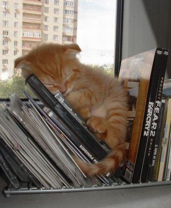 可愛い子猫画像30