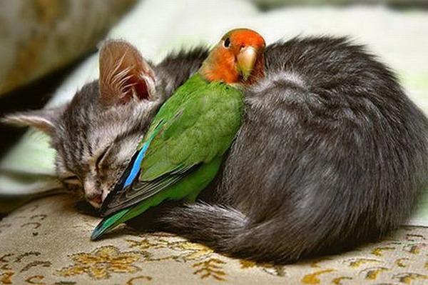 動物仲良し可愛い画像14