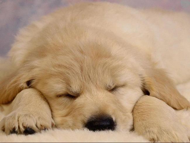 かわいい子犬画像118