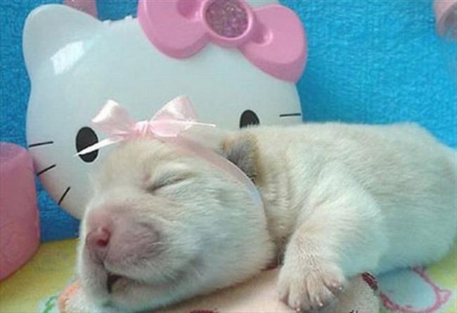 かわいい子犬画像62