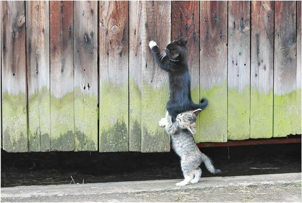 可愛い子猫画像3