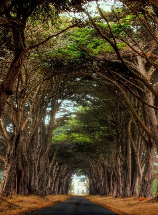 Point-Reyes-National-Seashore-California-1