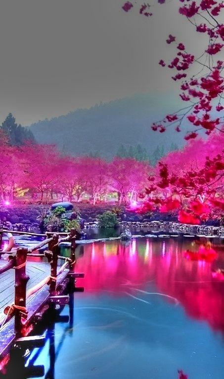 東湖桜花園 中国、湖北省