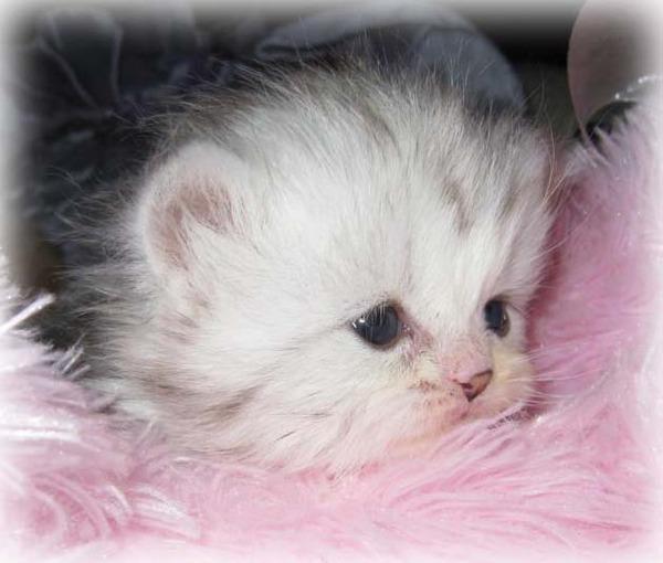 かわいい子猫画像311
