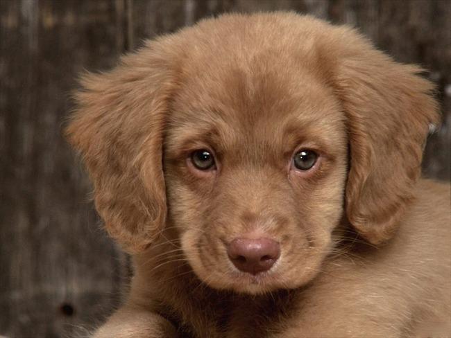 かわいい子犬画像116